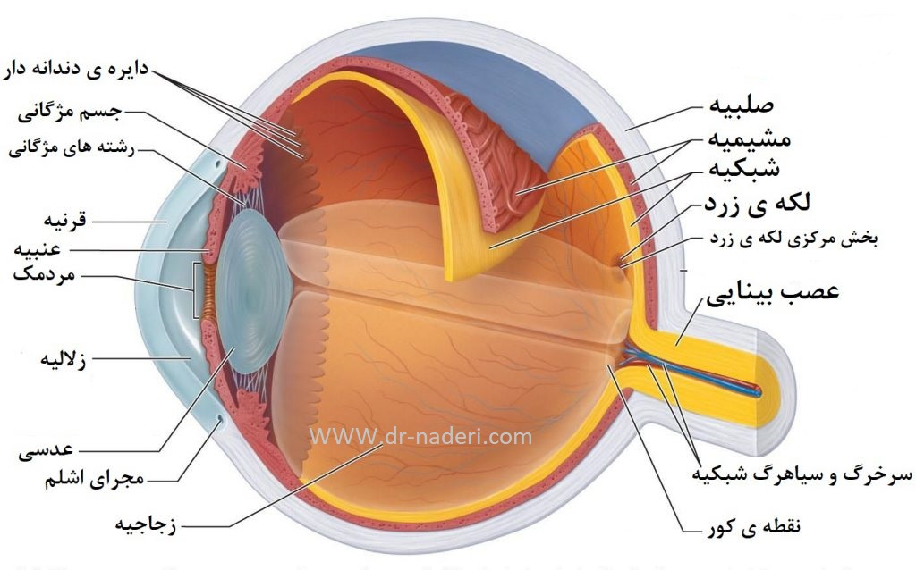 Eye Anatomy  ساختمان جشم